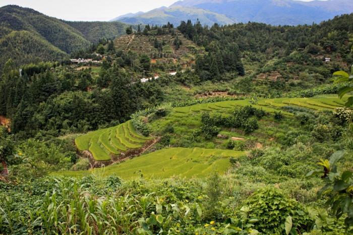 paysage-village-tulou