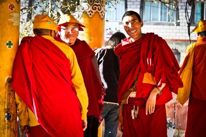 Lamas au Baita Gongy