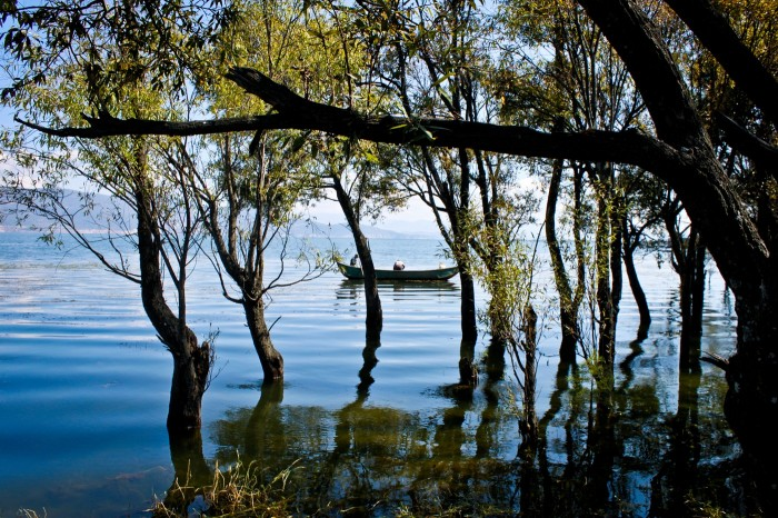 Forêt inondée au lac Erhai près de Dali au Yunnan