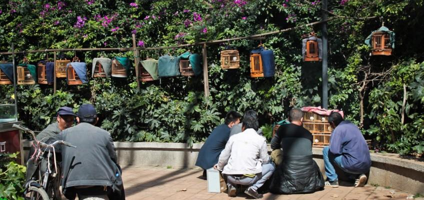 Marché aux oiseaux de Kunming