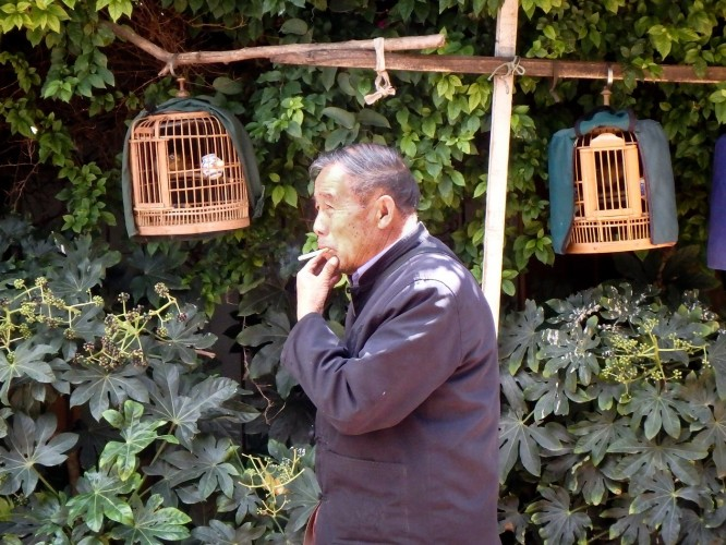 Marché aux oiseaux de Kunming, capitale du Yunnan