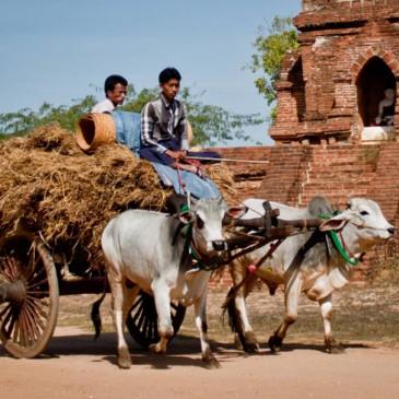 Du dernier royaume d'Arakan au premier empire birman