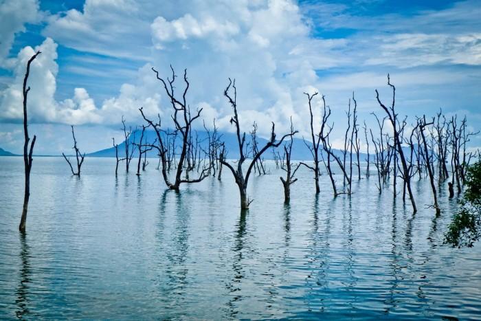 borneo_bako_mangrove